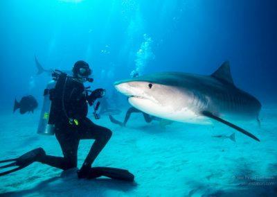 Bahamas – Eleuthera